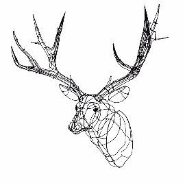 纯线条鹿头鹿首su模型