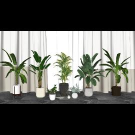 现代盆栽 绿植 植物窗帘组合su模型