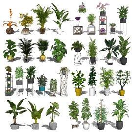 现代盆栽 绿植 植物 花架su模型