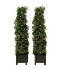 高层植物架子