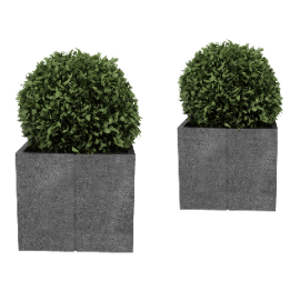 球状植物盆栽